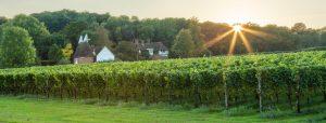 hush-heath-vineyards